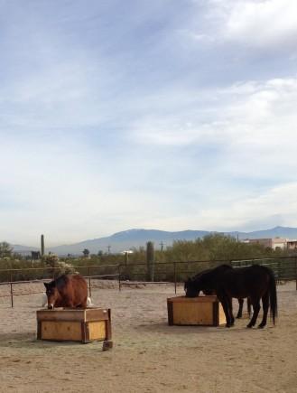 Horse Feeder 008